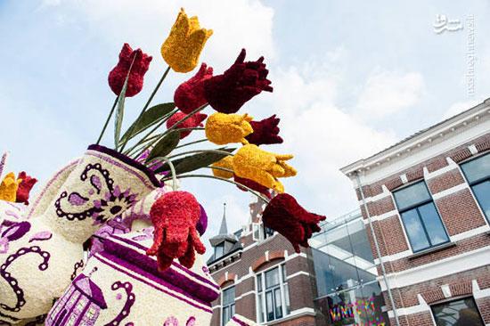 گلهای غول پیکر در هلند