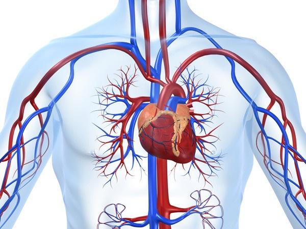 بیماریهای قلبی – عروقی رتبه نخست علت مرگ و میر در جهان