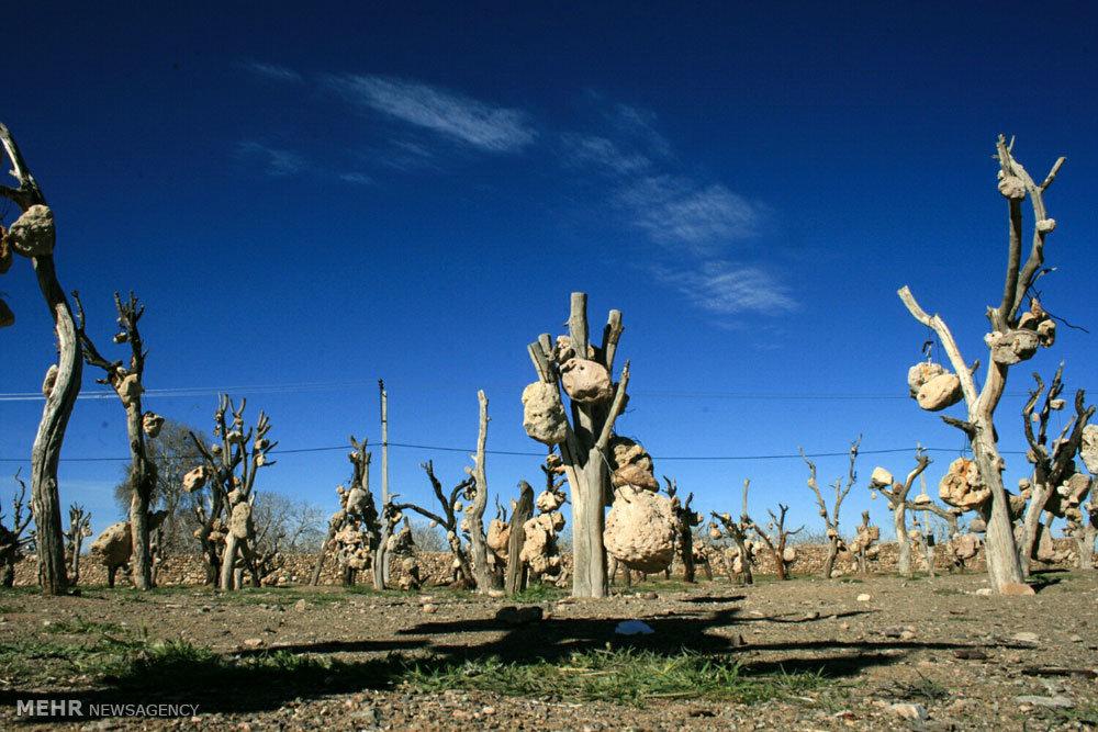 «باغ سنگی» ١٠ سال پس از مرگ «درویشخان»