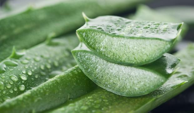 نکته سلامت؛ سلامت مردم؛ قربانی غذاهای ارزانقیمت!/ چای سبز فقط برای نوشیدن نیست/ چگونه چربیهای دور شکم را نابود کنیم؟