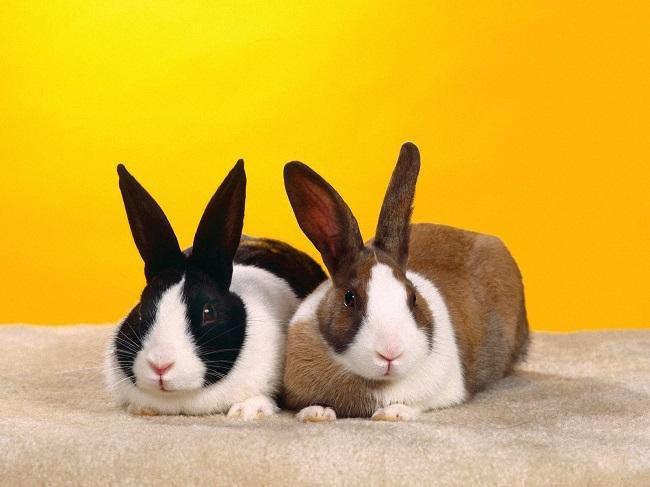 چرا خوردن گوشت خرگوش حرام است؟