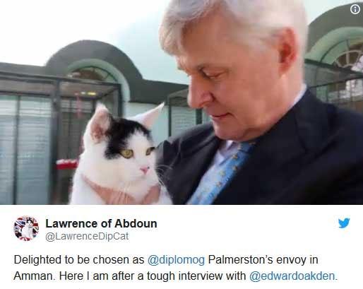 یک گربه به عنوان کارمند جدید سفارت بریتانیا