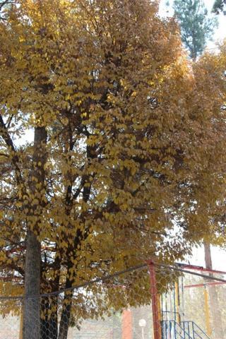 زیبایی های پاییز در باغ ملی قاین + تصاویر