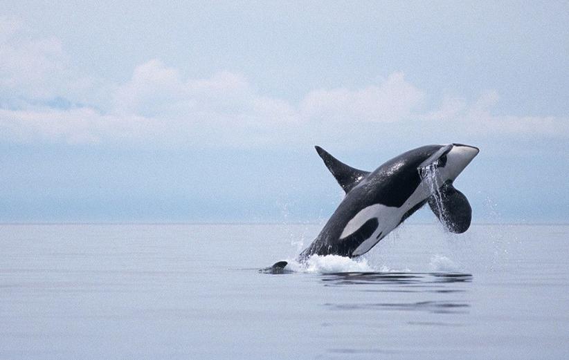 جدال با سنگینترین حیوان روی کره زمین