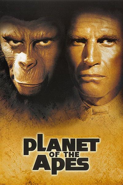 خوب ترین میمونهای هوشمند کداماند؟
