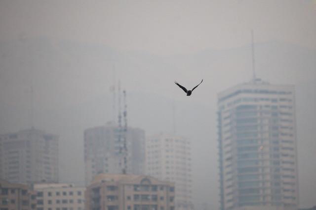 آلودگی هوا در تهران سالانه جان چند نفر را می گیرد؟