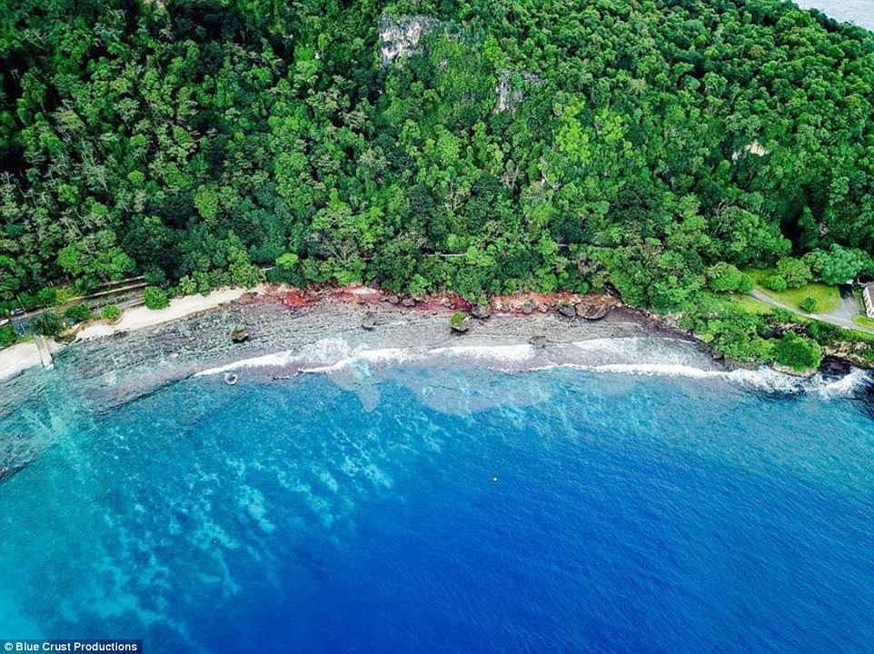 عکس ها دیدنی از حمله میلیونی خرچنگ ها به ساحل!