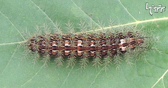 ترسناک ترین حشرات دنیا