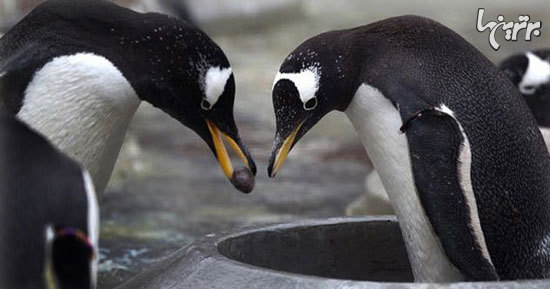 نمونههایی از هدیه دادن در دنیای حیوانات