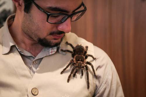 مرد عنکبوتی ایران را بشناسید