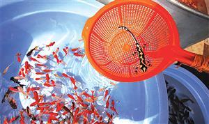 هفت سین با ماهی مریض