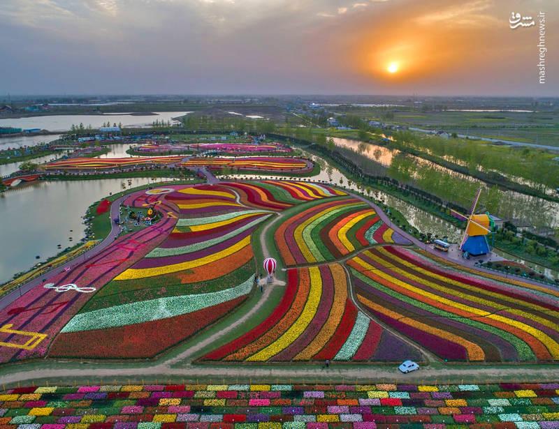 جشنواره گل ها در چین