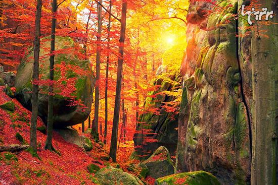 جنگلهای باشکوهی که طبیعت دوستان باید ببینند