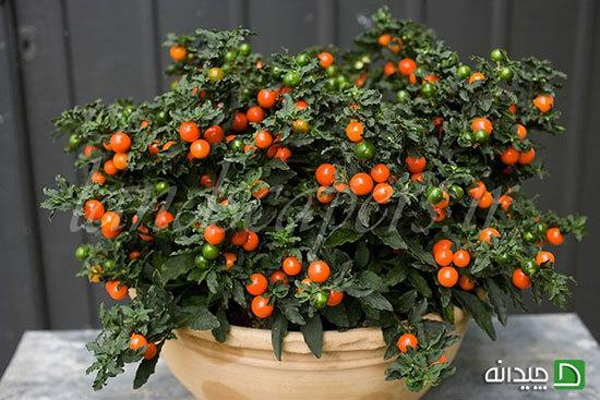 در طول سفر چگونه از گیاهان در خانه نگهدارى کنیم؟