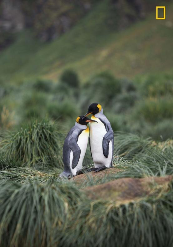 عکاس: مالین هانینگ / صبح زیبا در گلد هاربر در جنوب جورجیا و دو پنگوئن عاشق
