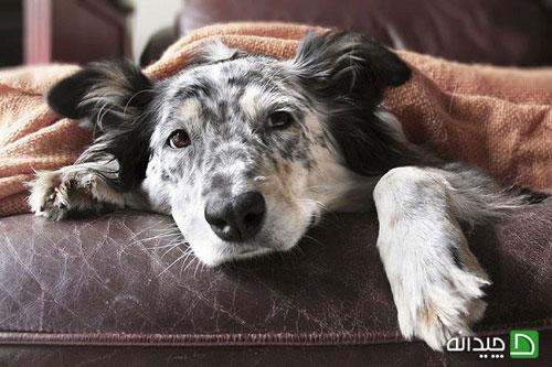 موی حیوانات خانگی را به راحتی از سطوح مختلف پاک کنید!
