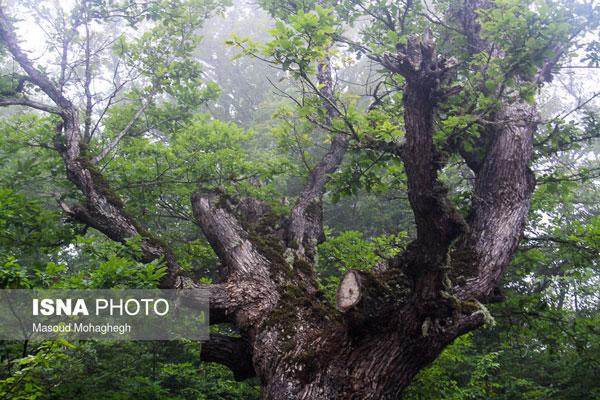 ایران زیباست؛ جنگل «رودبارک»
