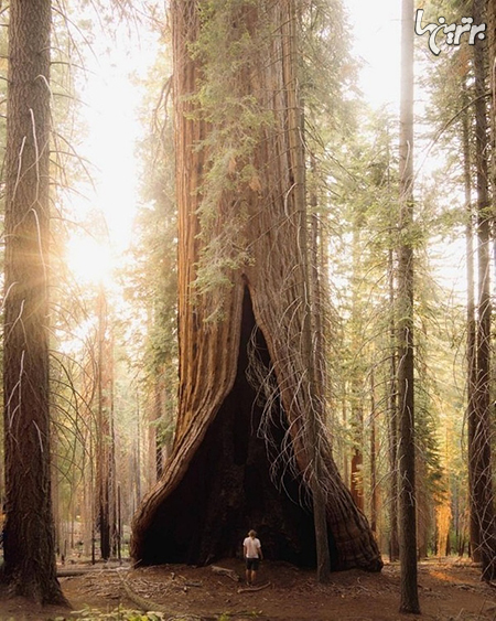 عجایب طبیعت که فکر نمیکردید وجود داشته باشند