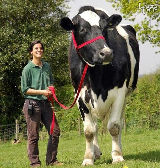 حیوانات بزرگی که باور نمی کنید حقیقی باشند
