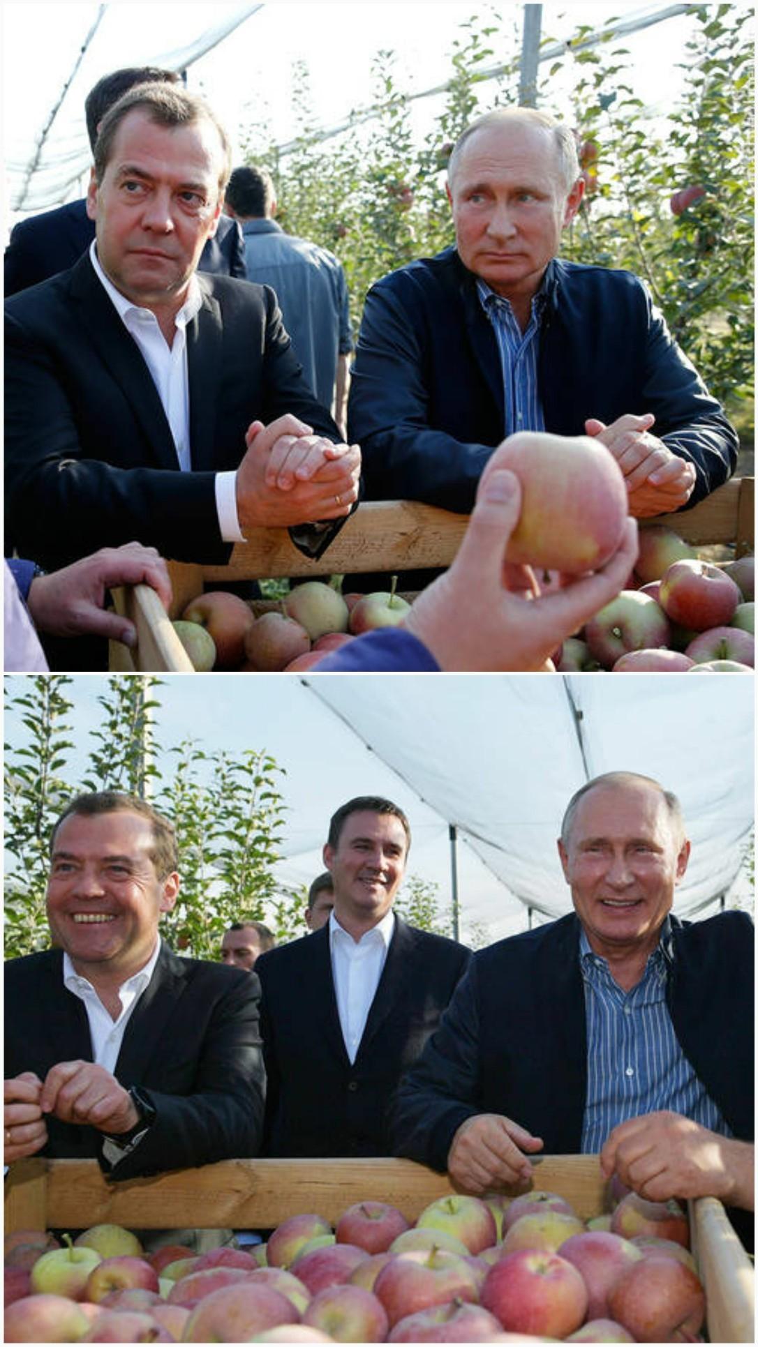 تصویری جالب از رئیس جمهور در باغ سیب!