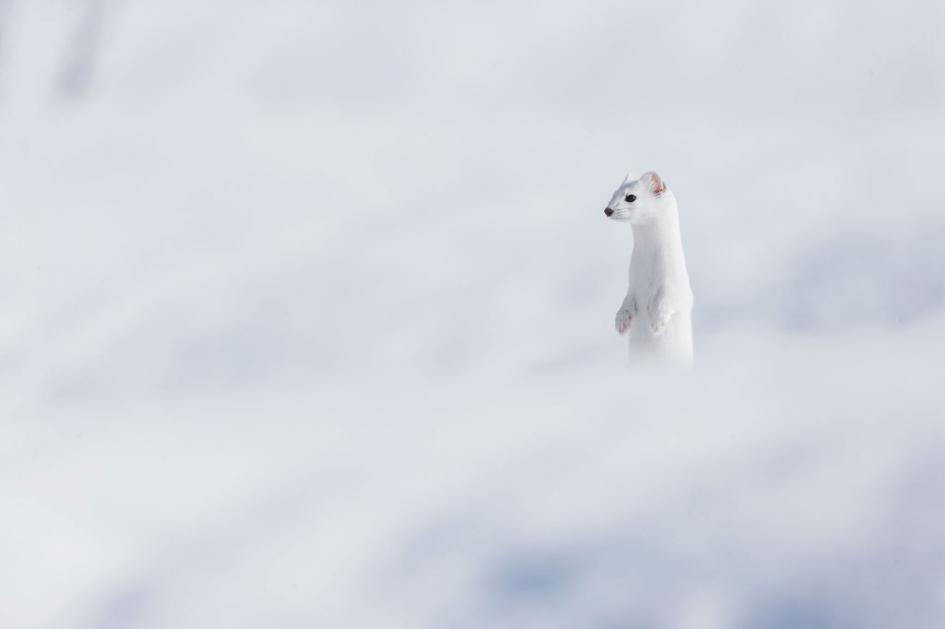 تصویر روز نشنال جئوگرافیک؛ سفید در سفید