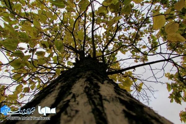 خودنمایی پاییز در منطقه آزاد ماکو