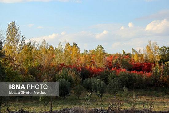فصل هزار رنگ در نصف جهان و اهر