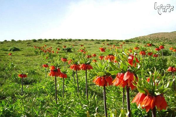 پیشنهاد نوروزی؛ به شهرهای بهاری ایران سفر کنید