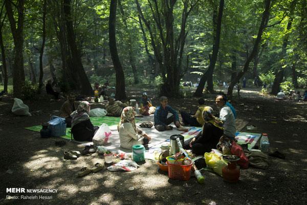 تفریح خانوادگی در خنکای تابستانِ گلستان