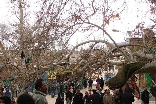 روایت ایکنا از درختی که در مظلومیت امام حسین خون میگرید