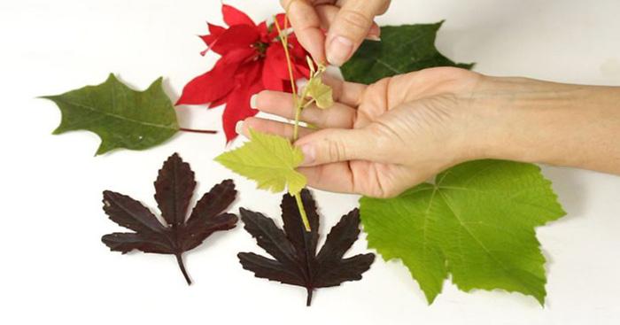۶ روش برای نگهداری از برگ های پاییزی