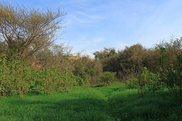 دشت بوخو دشتی از حیات   جاهای دیدنی قشم در پاییز