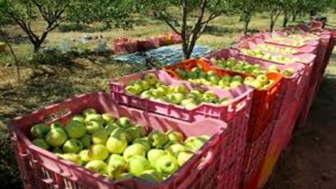 اهدای ۲ تن سیب به بیماران کرونایی در مراغه