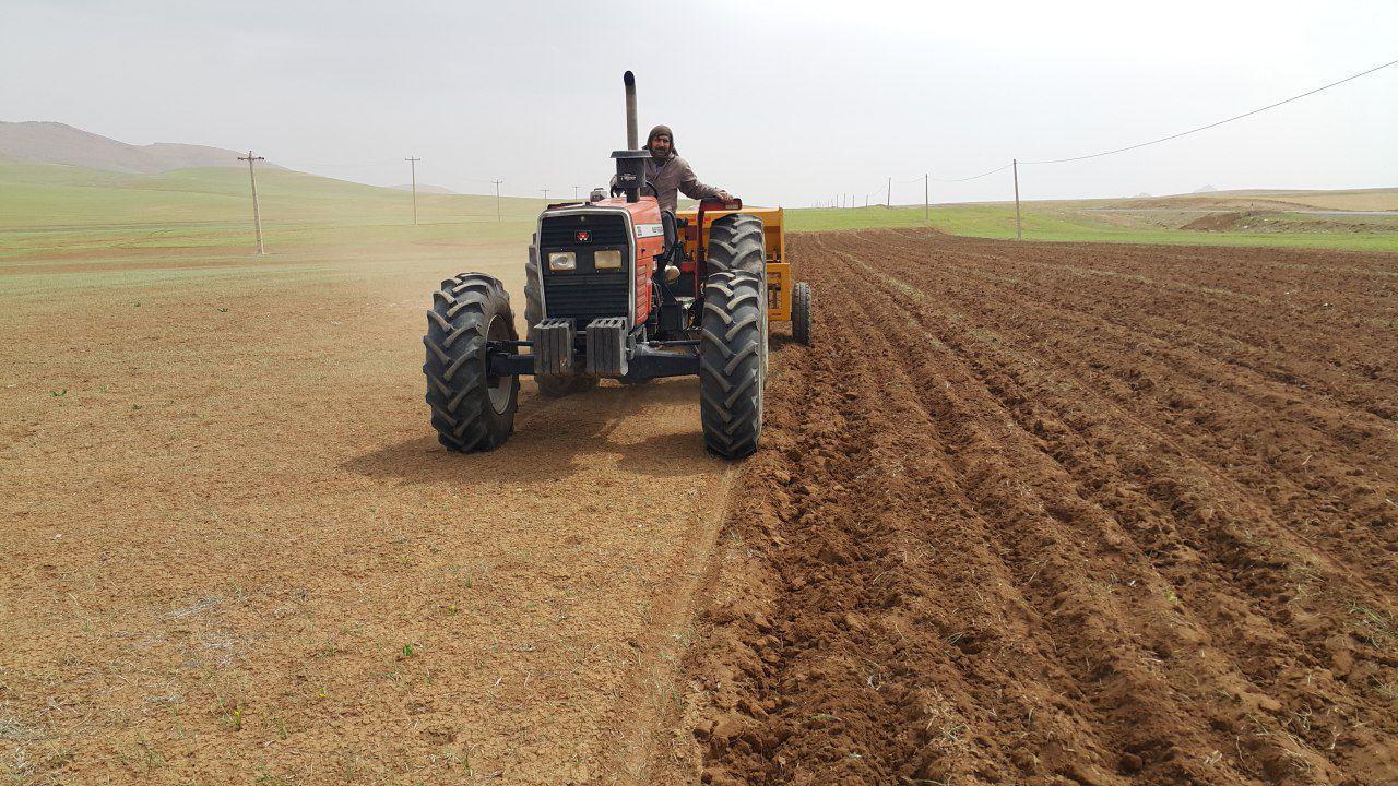 کشت بهاره در ۸۵ هزار هکتار از اراضی کشاورزی