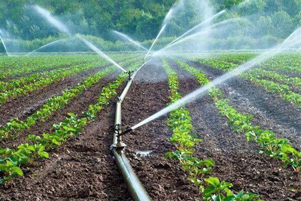 افزایش ۳۰ درصدی میزان تولید با اجرای سامانه نوین آبیاری