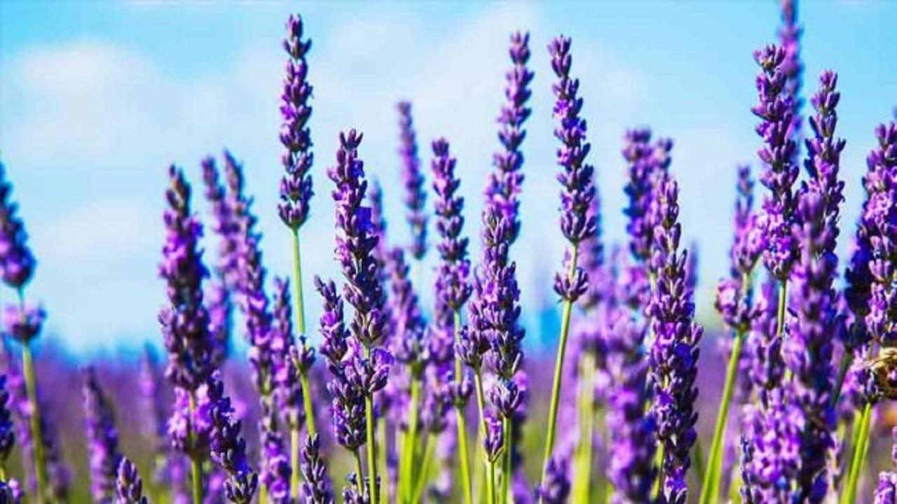 ضرورت توسعه زنجیره ارزش افزوده گیاهان دارویی در آذربایجان غربی