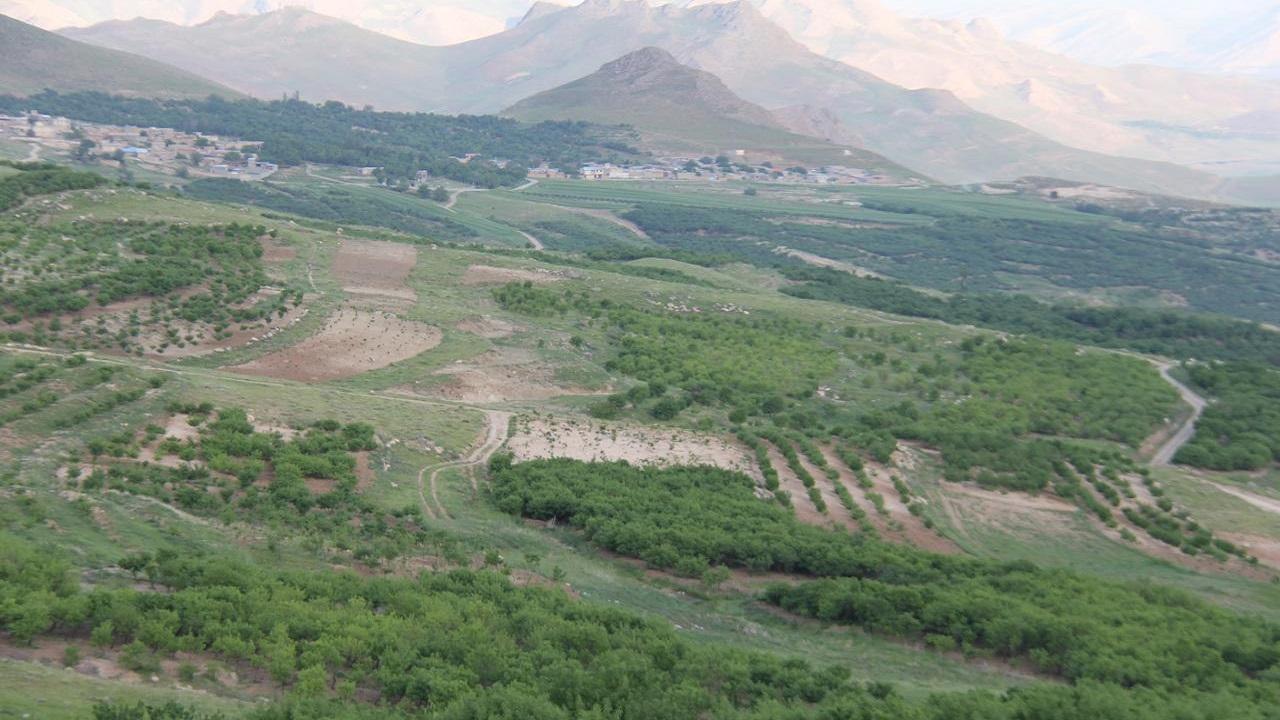 توسعه باغات دیم چهارمحال و بختیاری در اراضی شیب دار